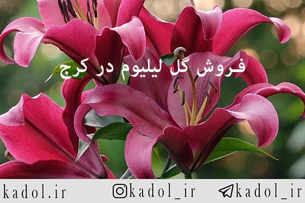 سفارش گل لیلیوم در کرج بصورت آنلاین