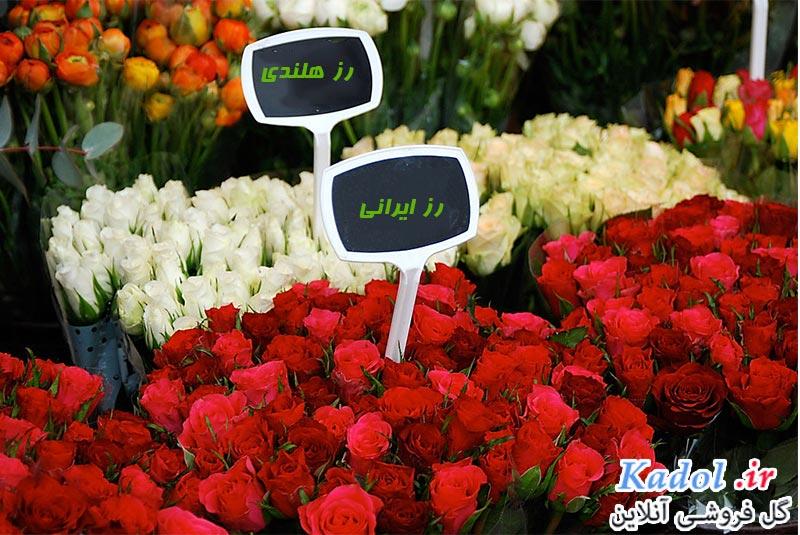فروش عمده گل رز در کرج